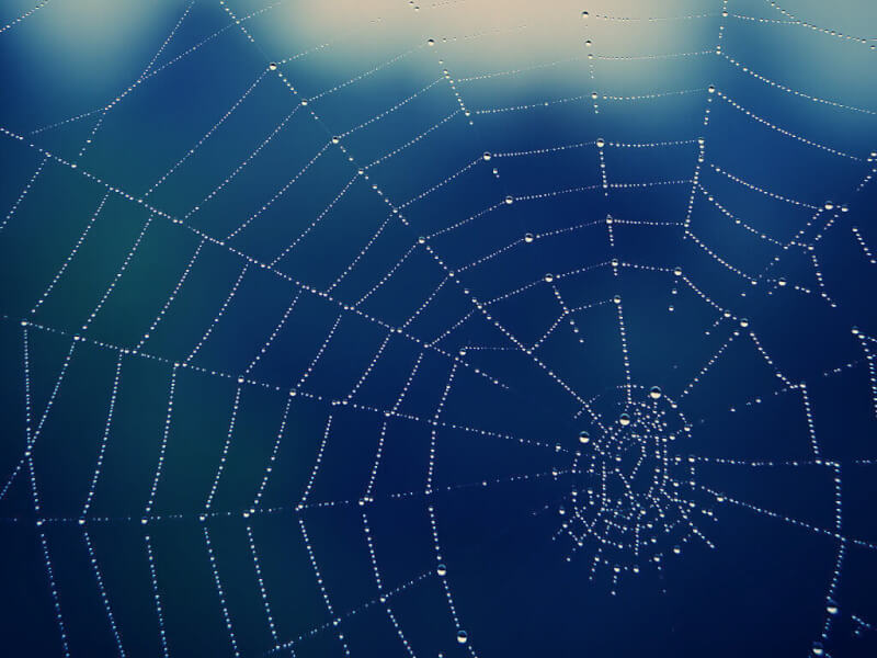 TOTS Family, Parenting, Kids, Food, Crafts, DIY and Travel spiderweb Why I Want To Be Charlotte: What We Can Learn From Charlotte's Web Parenting  joy charlottes web balance