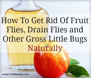 TOTS Family, Parenting, Kids, Food, Crafts, DIY and Travel How-To-Get-Rid-Of-Fruit-Flies-Drain-Flies-and-Other-Gross-Little-Bugs-–-Naturally Natural Insect Repellent for Fruit Flies, Drain Flies and other Insects Health & Wellness Home TOTS Family Uncategorized  natural bug repellent natural flies bug apple cider vinegar