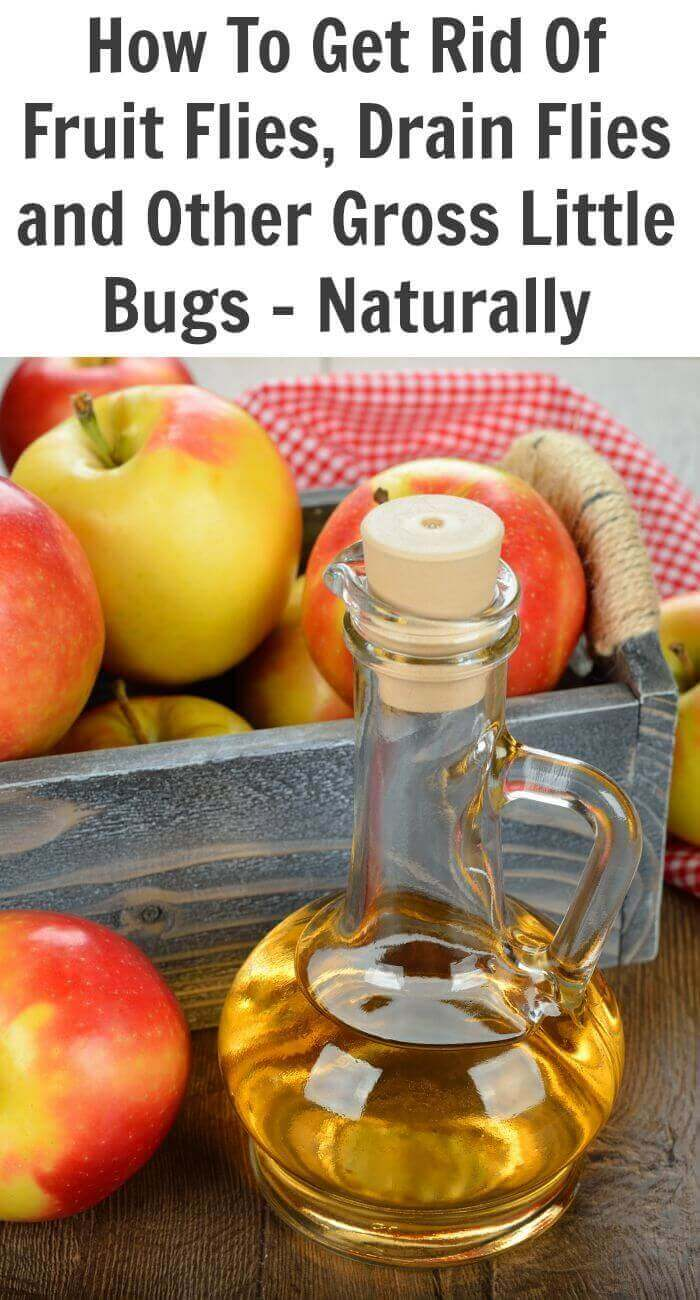 TOTS Family, Parenting, Kids, Food, Crafts, DIY and Travel How-To-Get-Rid-Of-Fruit-Flies-Drain-Flies-and-Other-Gross-Little-Bugs-Naturally Natural Insect Repellent for Fruit Flies, Drain Flies and other Insects Health & Wellness Home TOTS Family Uncategorized  natural bug repellent natural flies bug apple cider vinegar