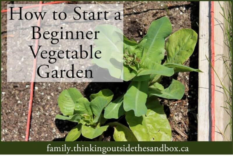 How to Start a Beginner Vegetable Garden - Thinking Outside the Sandbox Family