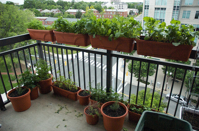 TOTS Family, Parenting, Kids, Food, Crafts, DIY and Travel Balcony-Garden Small Space Gardening: Apartment Living Gardening Home TOTS Family  vegetable garden plants planting container gardening apartment gardening