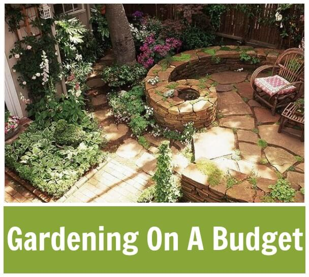 Gardening On A Budget