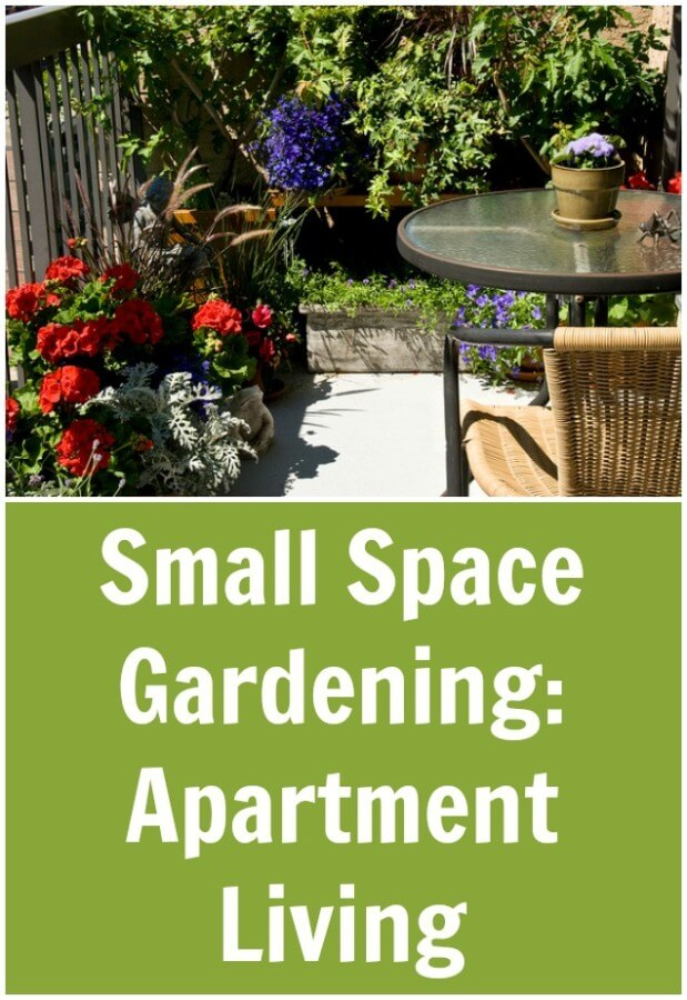 Small Space Gardening: Apartment Living | TOTS Family, Parenting ...