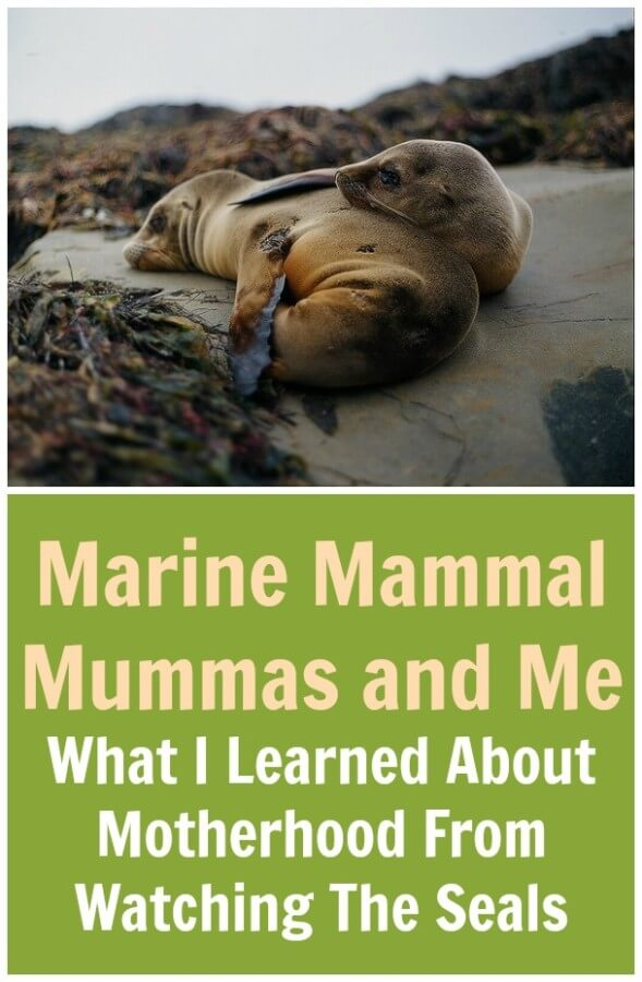 Marine Mammal Mummas and Me. What I Learned About Motherhood From Watching The Seals.