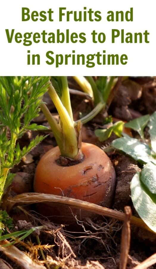 TOTS Family, Parenting, Kids, Food, Crafts, DIY and Travel Best-Fruits-and-Vegetables-to-Plant-in-Springtime Best Fruits and Vegetables to Plant in Springtime Gardening Home Parenting TOTS Family Uncategorized  yard spring activities for kids spring plant outdoors home garden