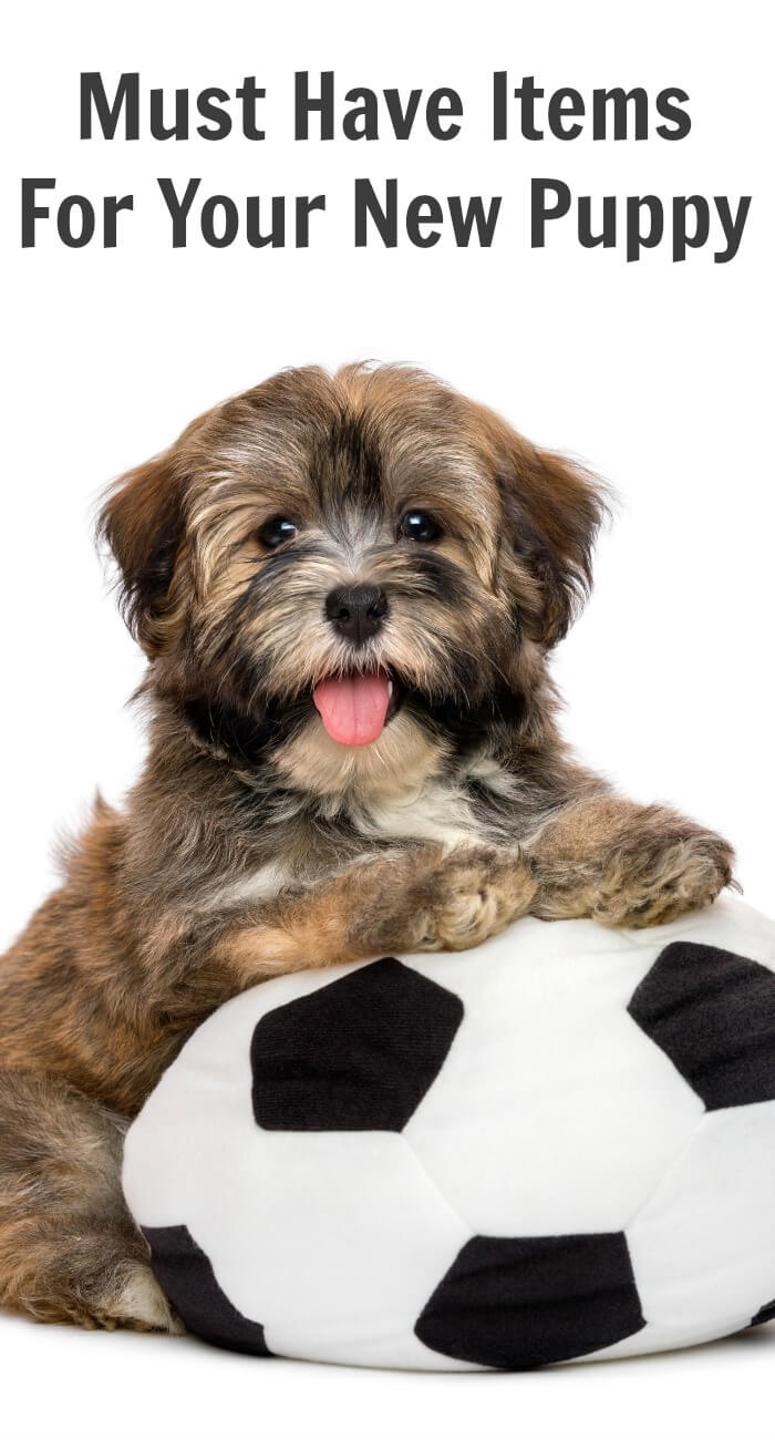 Must Have Wedding Poses: Must Have Items For Your New Puppy