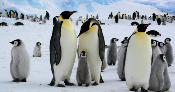 TOTS Family, Parenting, Kids, Food, Crafts, DIY and Travel Homeschooling-Antarctica Homeschooling: Antarctica Unit Kids Parenting TOTS Family  penguins homeschooling explorers antarctica unit