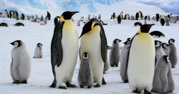 TOTS Family, Parenting, Kids, Food, Crafts, DIY and Travel Homeschooling-Antarctica Homeschooling: Antarctica Unit Kids Parenting TOTS Family  penguins homeschooling explorers antarctica unit