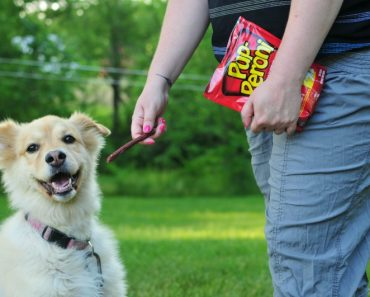 TOTS Family, Parenting, Kids, Food, Crafts, DIY and Travel Favorite-Summer-Dog-Activities-370x297 Favorite Summer Dog Activities Home Sponsored TOTS Family  summer pet dog