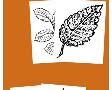 TOTS Family, Parenting, Kids, Food, Crafts, DIY and Travel Free-Printable-Leaf-Coloring-Pages-for-Kids-370x297 Free Printable Leaf Coloring Pages Crafts Kids TOTS Family Uncategorized  toddlers kids activities fall scavenger hunt fall activities fall