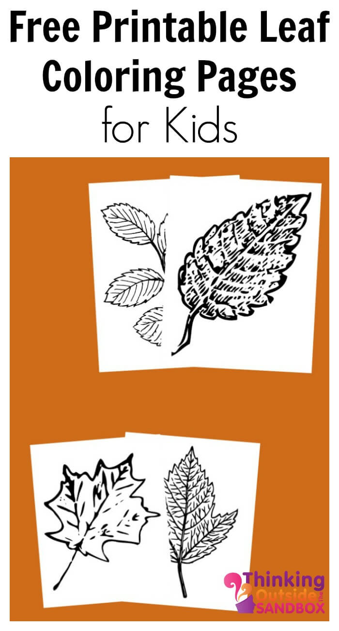 Free Printable Leaf Coloring Pages Tots Family Parenting Kids Food