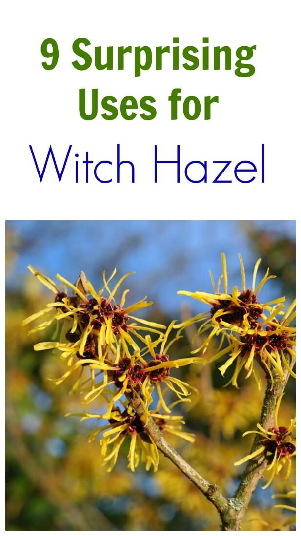 TOTS Family, Parenting, Kids, Food, Crafts, DIY and Travel whazel 9 Surprising Uses For Witch Hazel Home TOTS Family Uncategorized  witch hazel natural alternatives