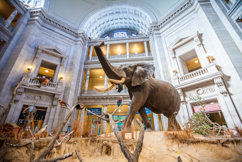 Best Spring Activities for Families visit a museum
