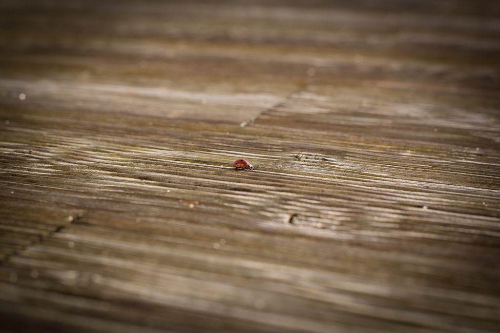 TOTS Family, Parenting, Kids, Food, Crafts, DIY and Travel ladybug-1373906_1920-1024x683 5 Things To Know Before Refinishing Old Hardwood Floors Home TOTS Family Uncategorized  renovate reno refinish old wood how to hardwood floors floors finish hardwood
