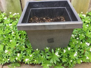 First you need a planter container with enough depth to allow the root system to grow and support the weight of mature plants so the Sun and Shade Planter thrives.