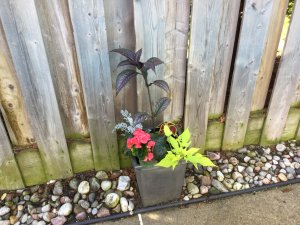 This was my mature growth Planter for Sun and Shade beside a fence in the middle to late summer.