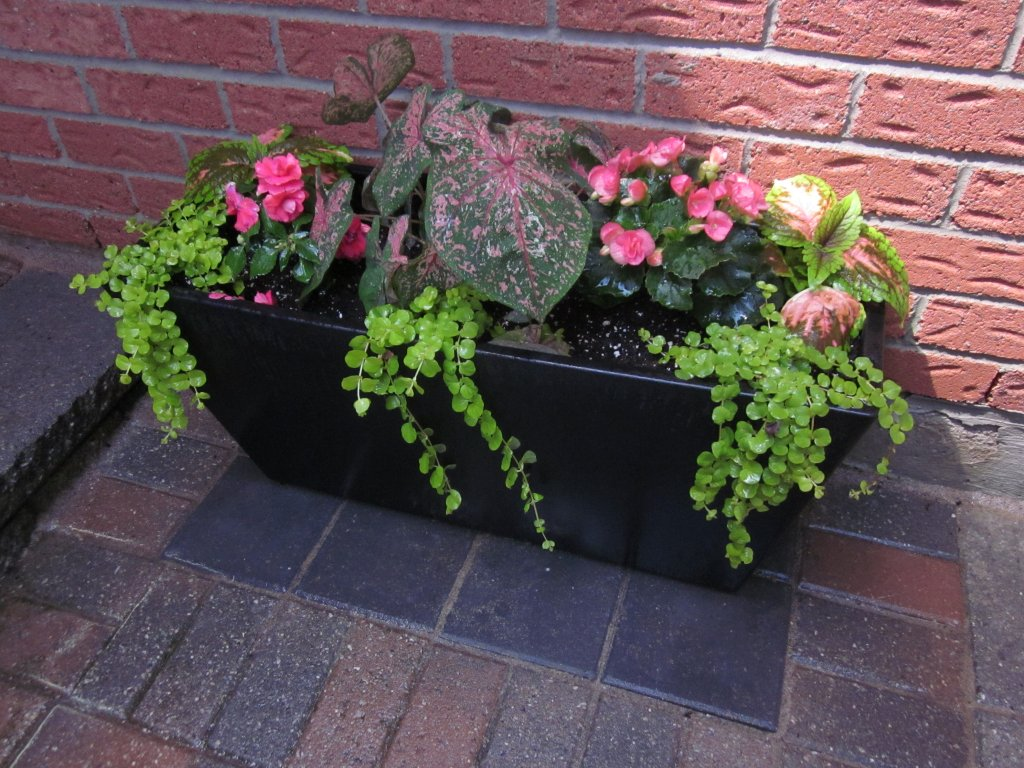 DIY Shade & Sun Planter - I found interesting wording for plants and flowers creatively used in a planter: Thriller, Filler and Spiller.