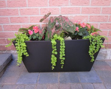 DIY Shade & Sun Planter