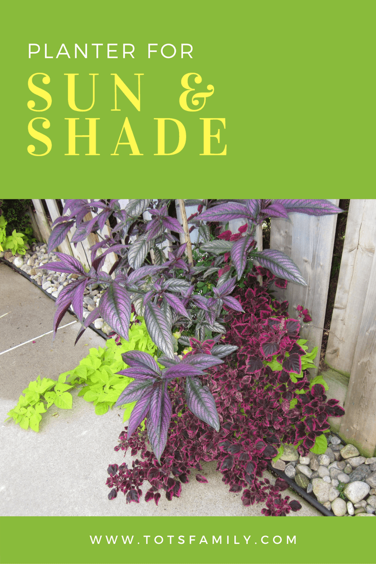TOTS Family, Parenting, Kids, Food, Crafts, DIY and Travel Sun-Shade-Planter-Green Planter for Sun and Shade beside a Fence Gardening Home Style TOTS Family Uncategorized  Sun and Shade Planter Planter