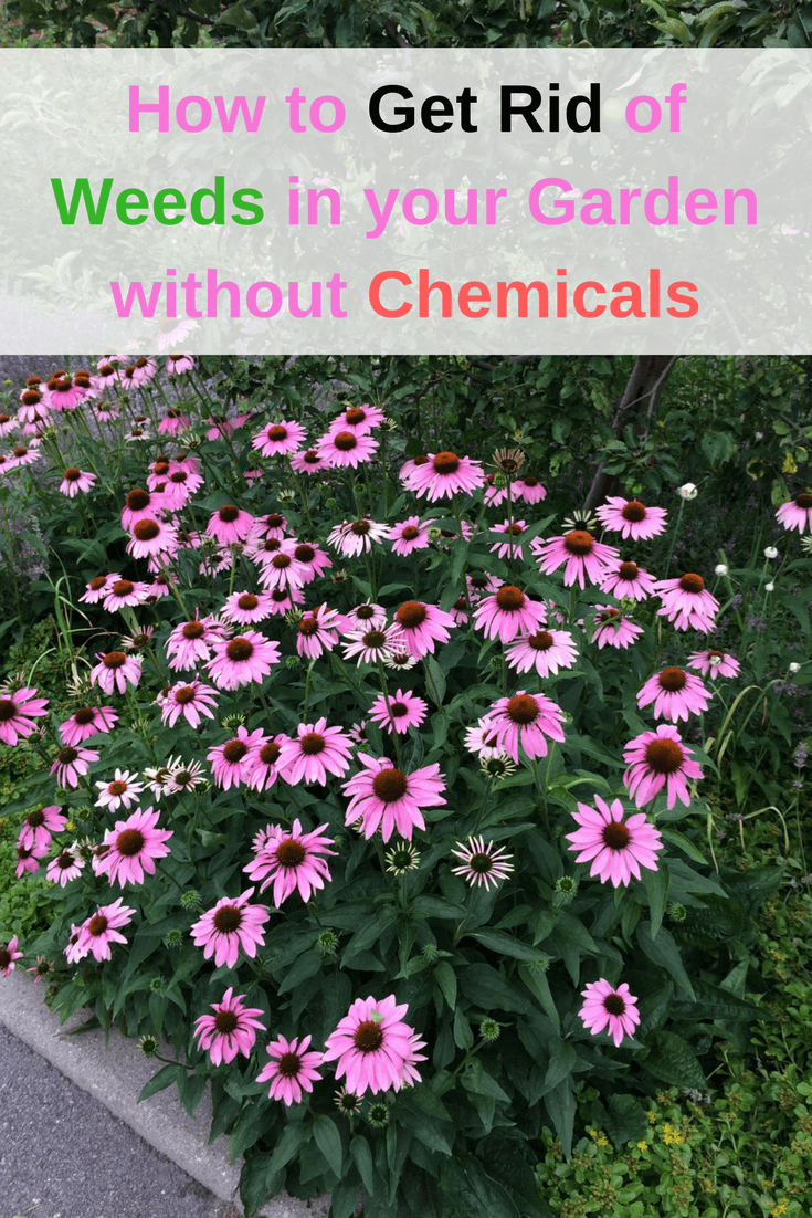 how to get rid of weeds in your garden without chemicals tots family parenting kids food ForHow To Get Rid Of Weeds In Garden