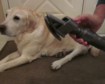 Dyson Ball™ Animal 2 – Torture Tested