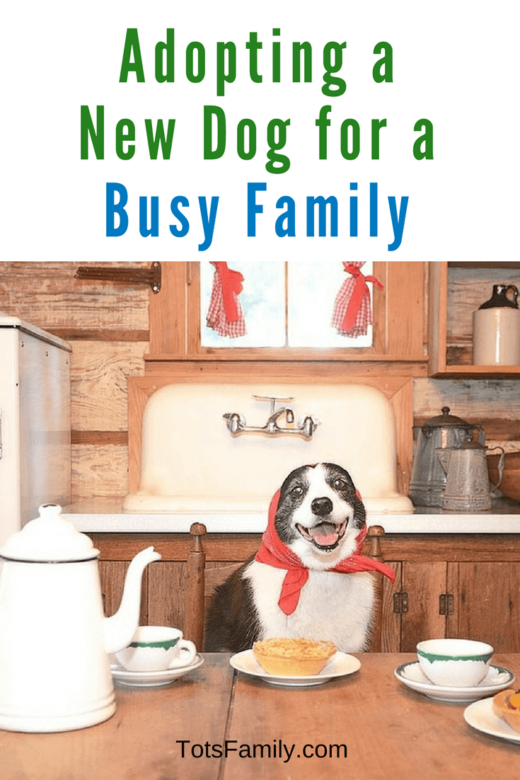When adopting a new dog for a busy family there are many points to consider.