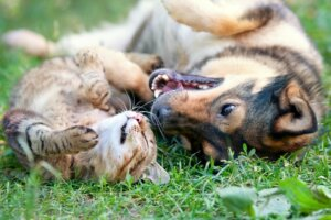 Dog and Cat playing together - 3 Natural Remedies for Your Pet