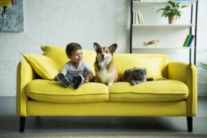 Happy child sitting with pet dog and cat - Natural Remedies for Your Pet