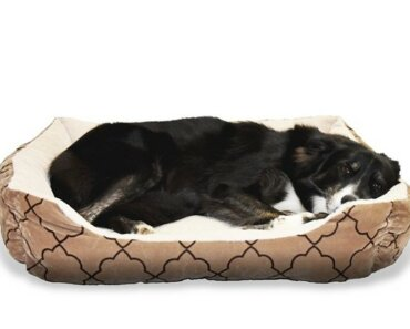 image of large dog lying on dog bed -8 Things Dog Owners Must Buy